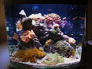 Aquariofilia --- Mundo dos Aquários 75096210