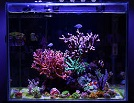 Aquariofilia --- Mundo dos Aquários Ima34510