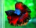 Aquariofilia --- Mundo dos Aquários Images10