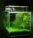 Aquariofilia --- Mundo dos Aquários Imasdg12
