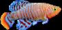 Peixes Sem_no12
