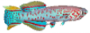 Peixes Sem_no13