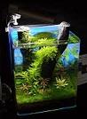 Aquariofilia --- Mundo dos Aquários Yandic10