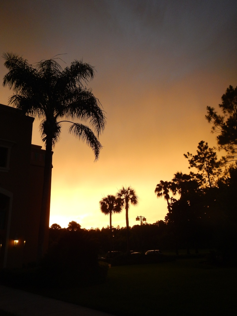 Le merveilleux voyage en Floride de Brenda et Rebecca en Juillet 2014 - Page 6 7714