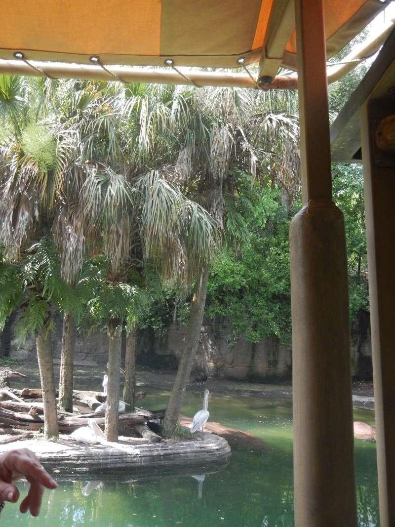 Le merveilleux voyage en Floride de Brenda et Rebecca en Juillet 2014 - Page 2 Safari13