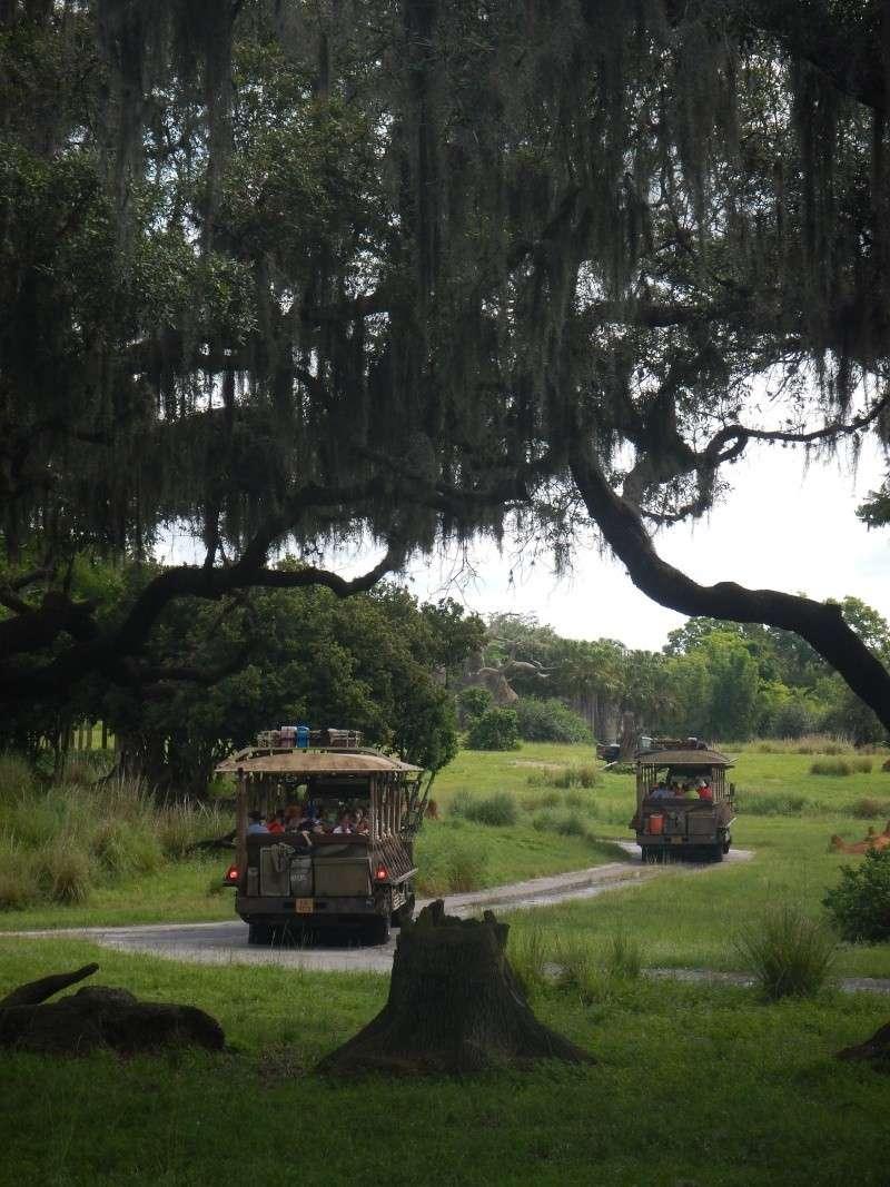 Le merveilleux voyage en Floride de Brenda et Rebecca en Juillet 2014 - Page 2 Safari16