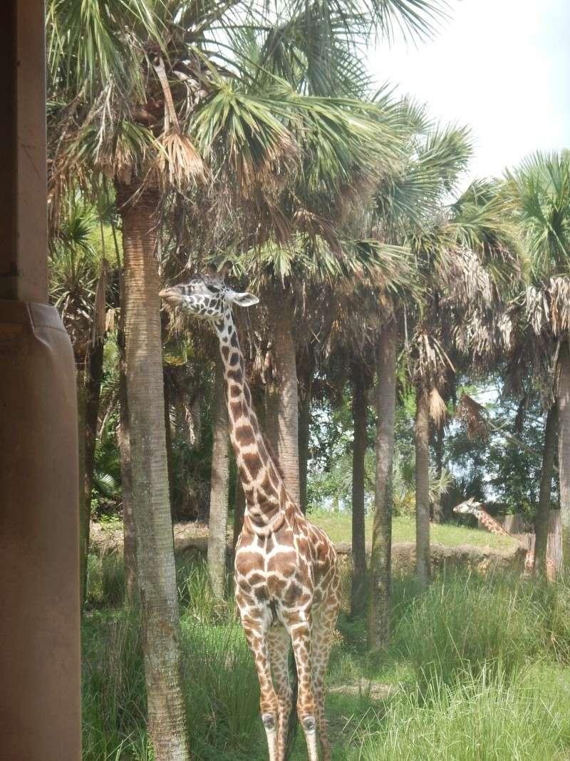 Le merveilleux voyage en Floride de Brenda et Rebecca en Juillet 2014 - Page 2 Safari20