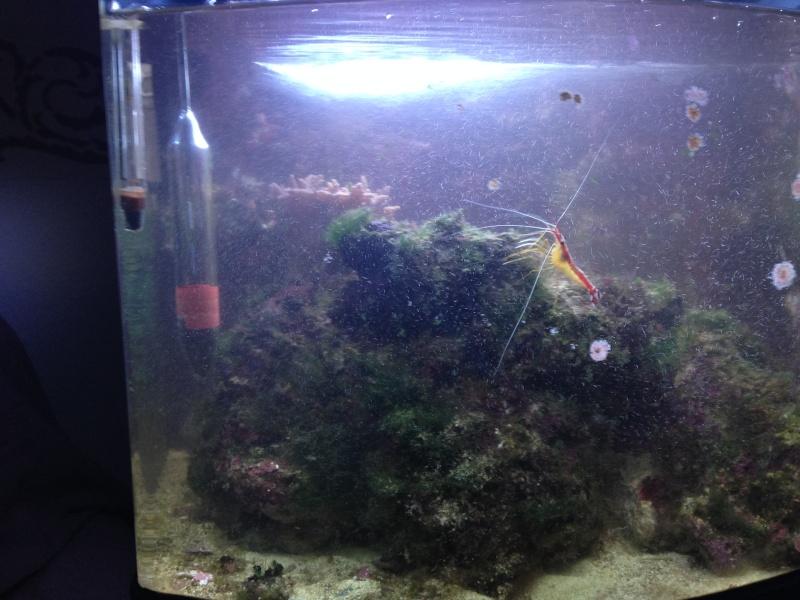 avis sur aquarium marin Img_0313