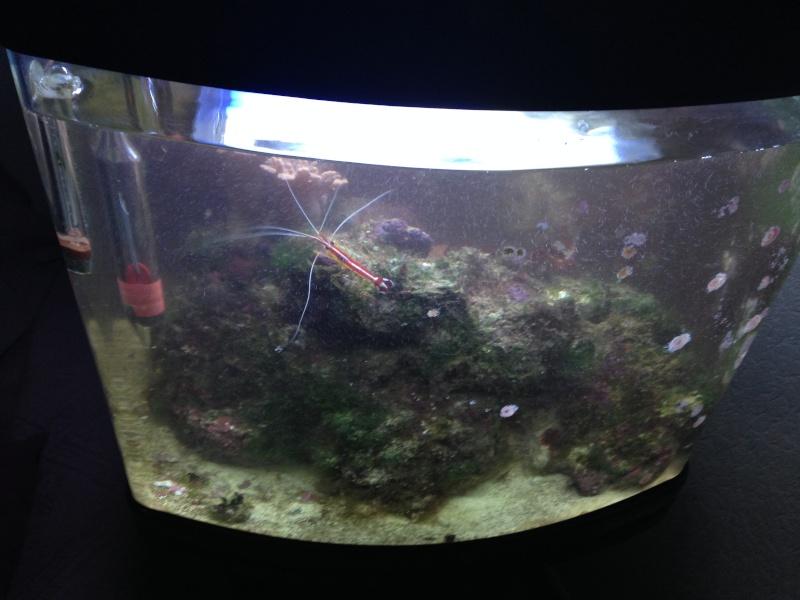 avis sur aquarium marin Img_0314