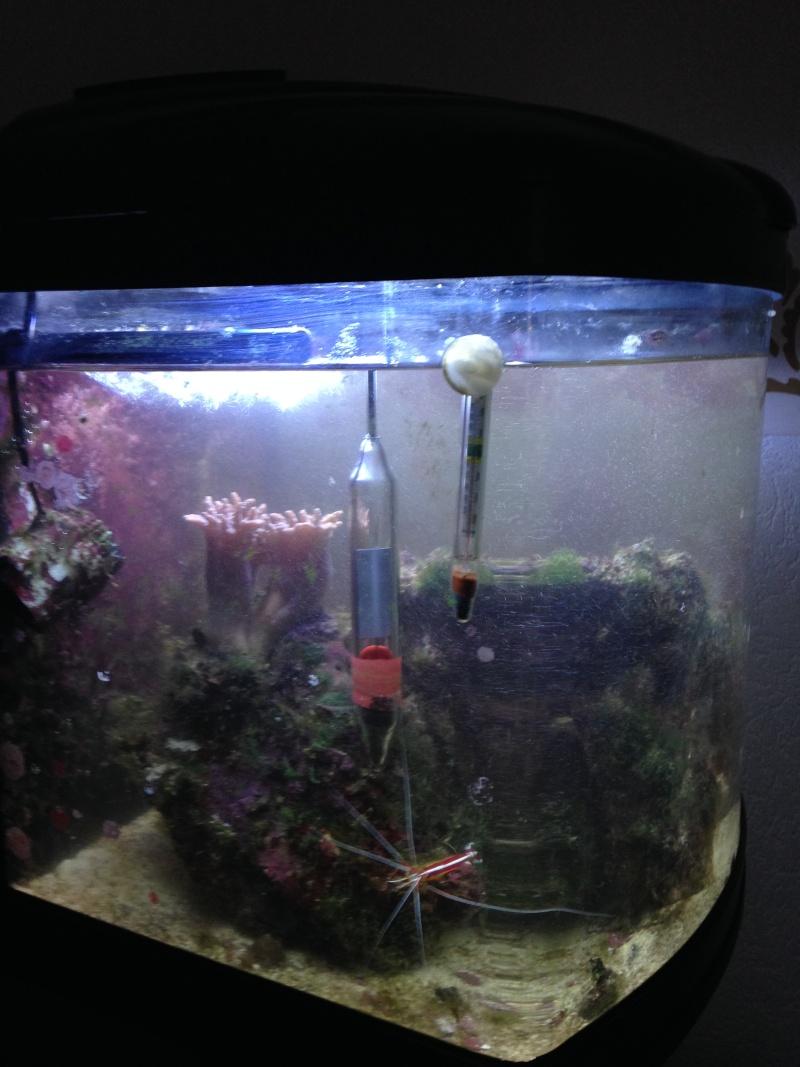 avis sur aquarium marin Img_0315