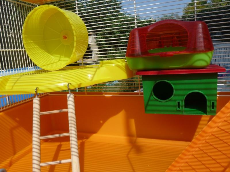 Vend cage avec ses accessoires (13) P1060011