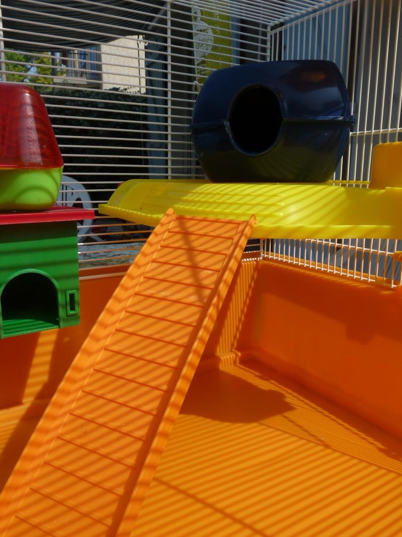 Vend cage avec ses accessoires (13) P1060012