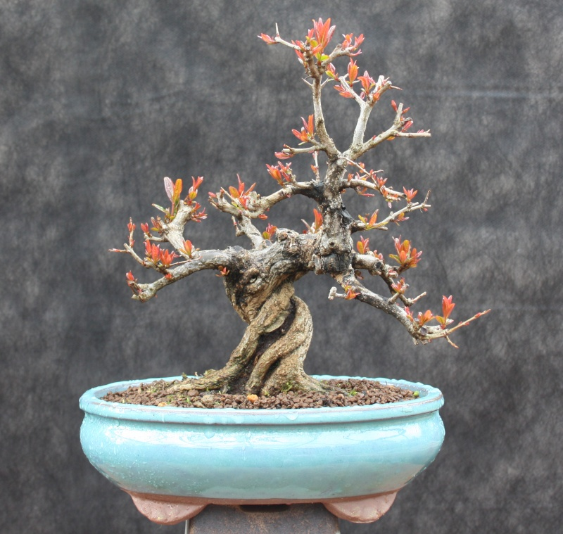 Some Recently Acquired Shohin Pg311