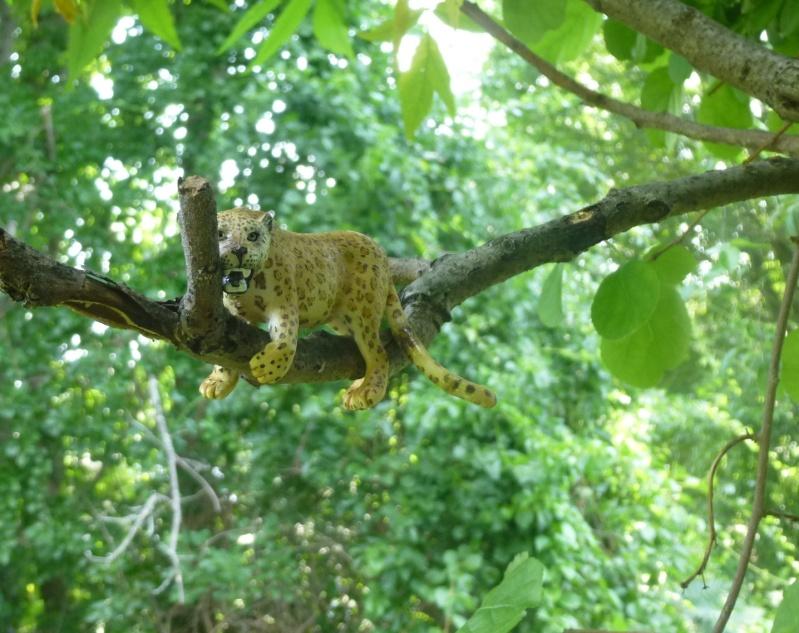 Leopard in tree Leapor10
