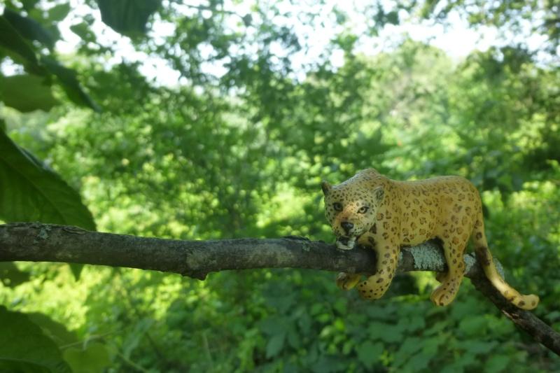 Leopard in tree Leapor11