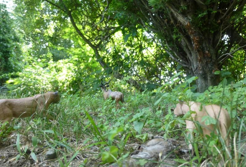Mojo Lionesses from Yvette Lion_k10