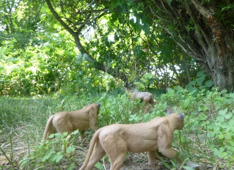 Mojo Lionesses from Yvette Lion_k11