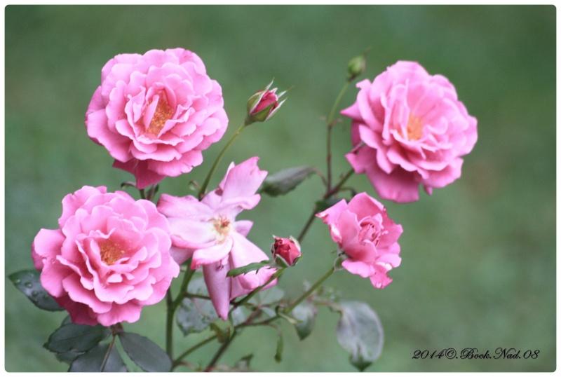 """Jardin des plantes, """"Les Capellans"""" St Cyprien - Page 4 Cadre102"""