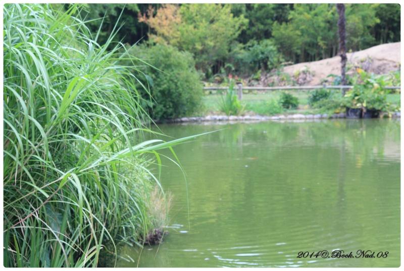 """Jardin des plantes, """"Les Capellans"""" St Cyprien - Page 3 Cadre117"""