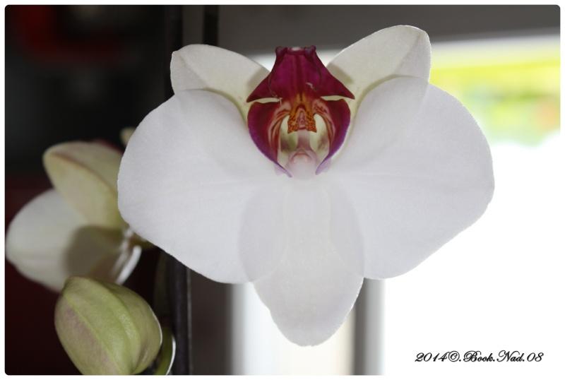Les Orchidées - Page 3 Cadre141