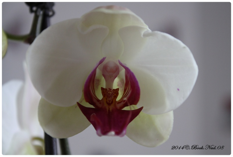 Les Orchidées - Page 3 Cadre144