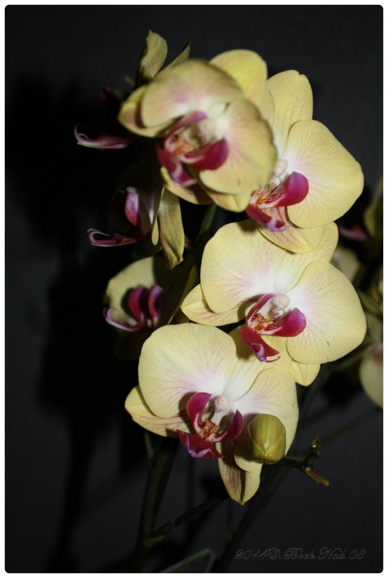 Les Orchidées - Page 3 Cadre145
