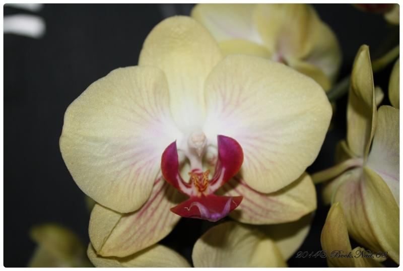 Les Orchidées - Page 3 Cadre146