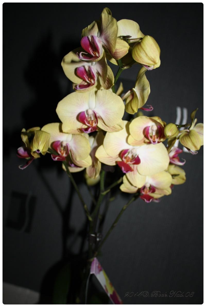 Les Orchidées - Page 3 Cadre147