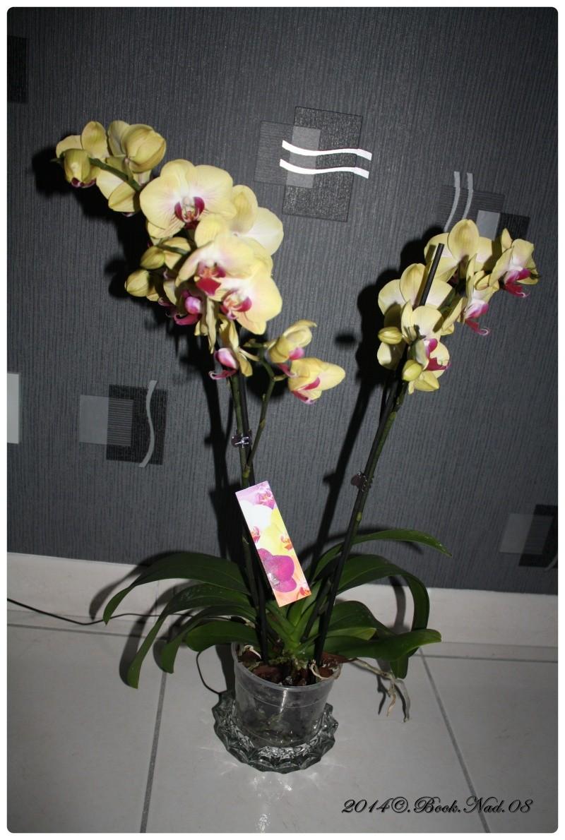 Les Orchidées - Page 3 Cadre148