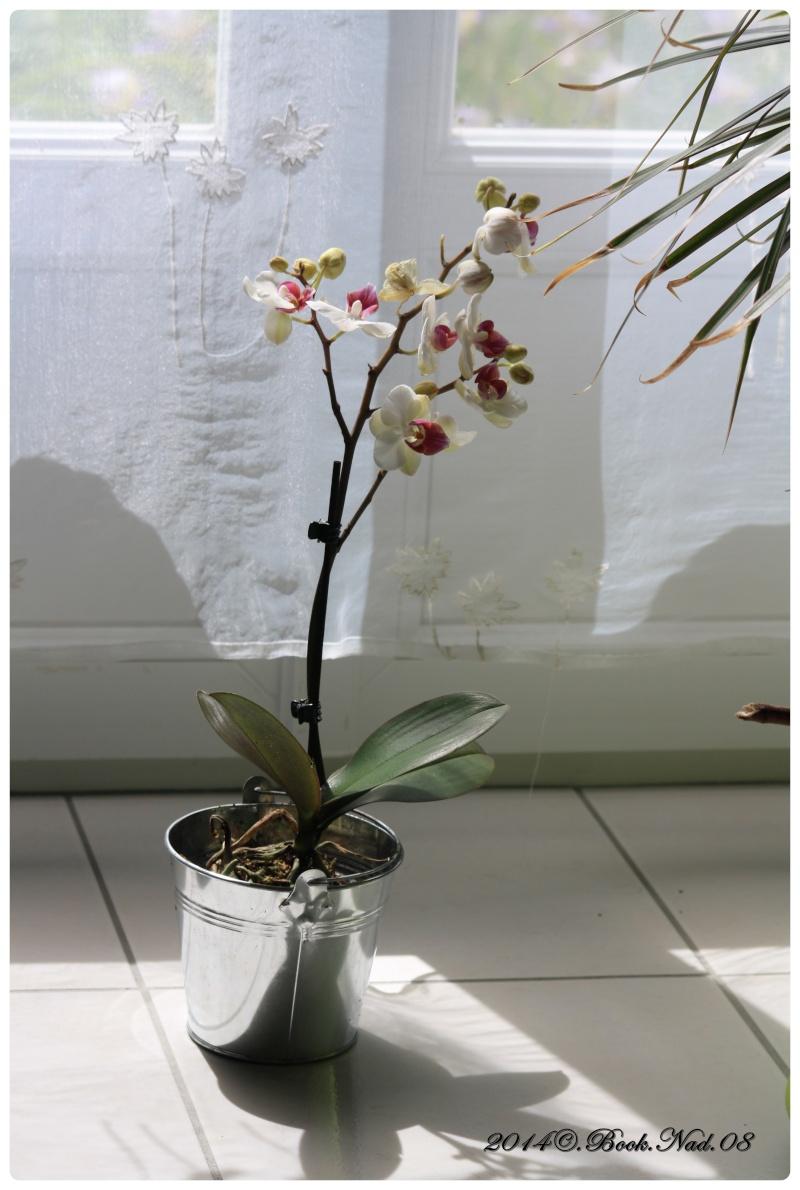 Les Orchidées - Page 5 Cadrer12