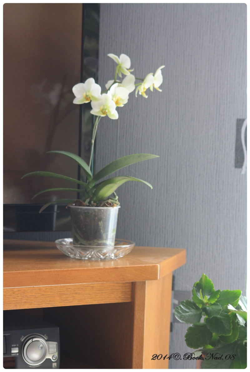 Les Orchidées - Page 5 Cadrer13