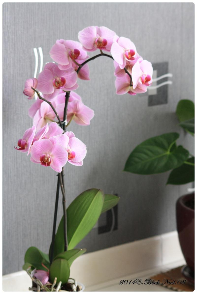 Les Orchidées - Page 4 Cadrer15