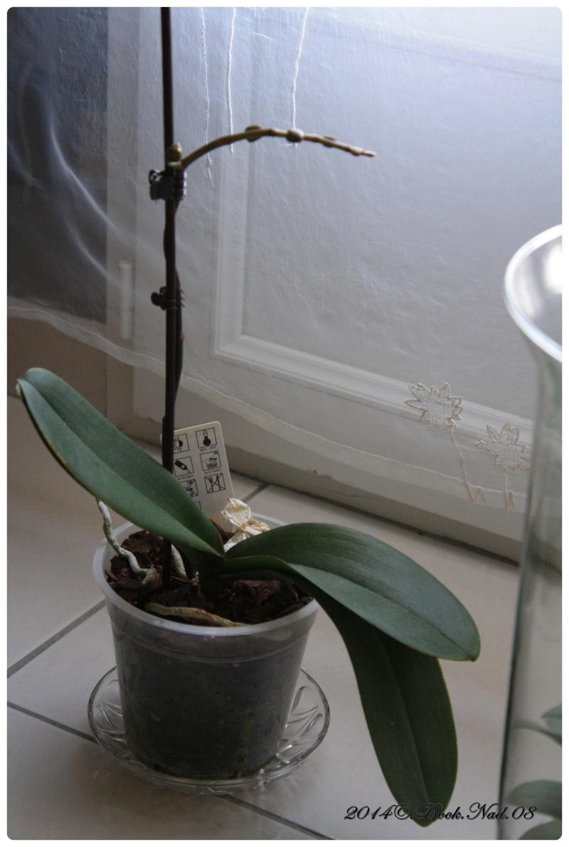 Les Orchidées - Page 4 Cadrer16