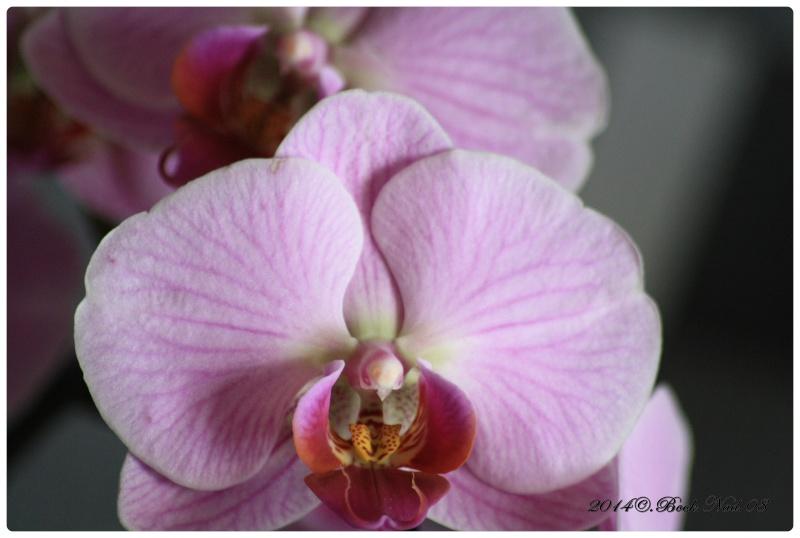 Les Orchidées - Page 4 Cadrer17