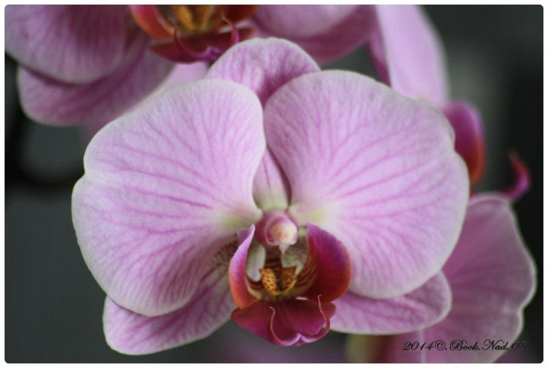 Les Orchidées - Page 3 Cadrer22