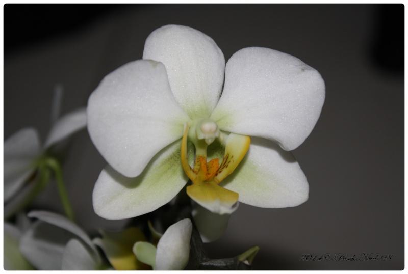 Les Orchidées - Page 4 Cadrer27