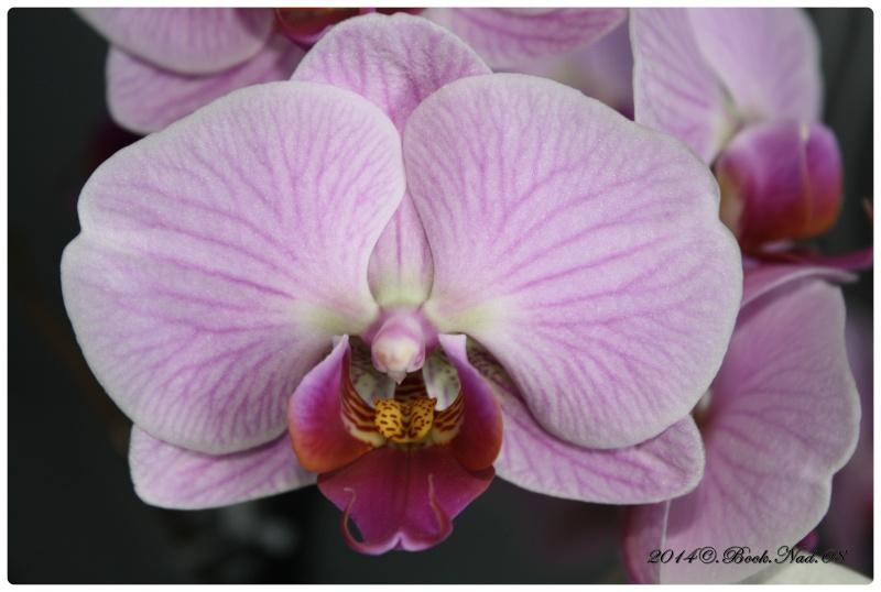 Les Orchidées - Page 4 Cadrer29