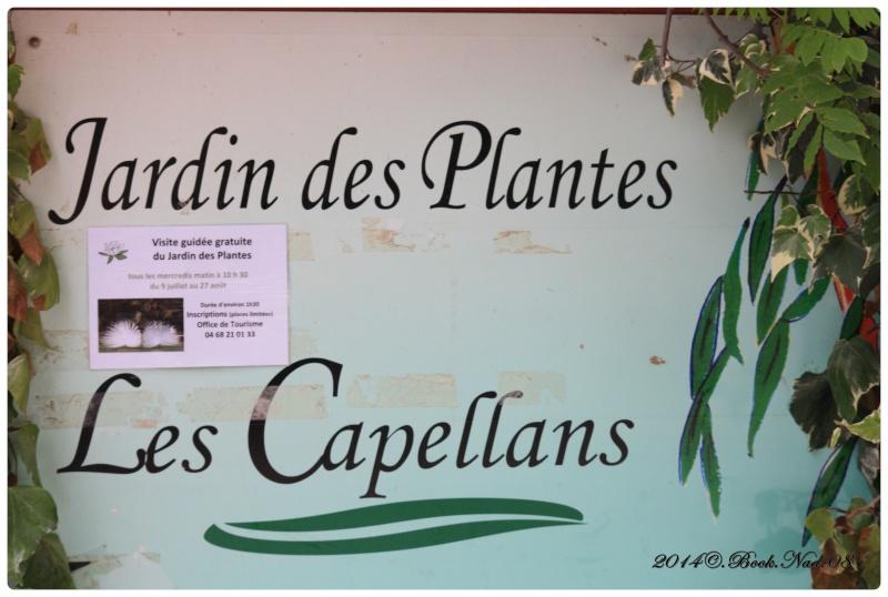 """Jardin des plantes, """"Les Capellans"""" St Cyprien - Page 5 Cadrer69"""