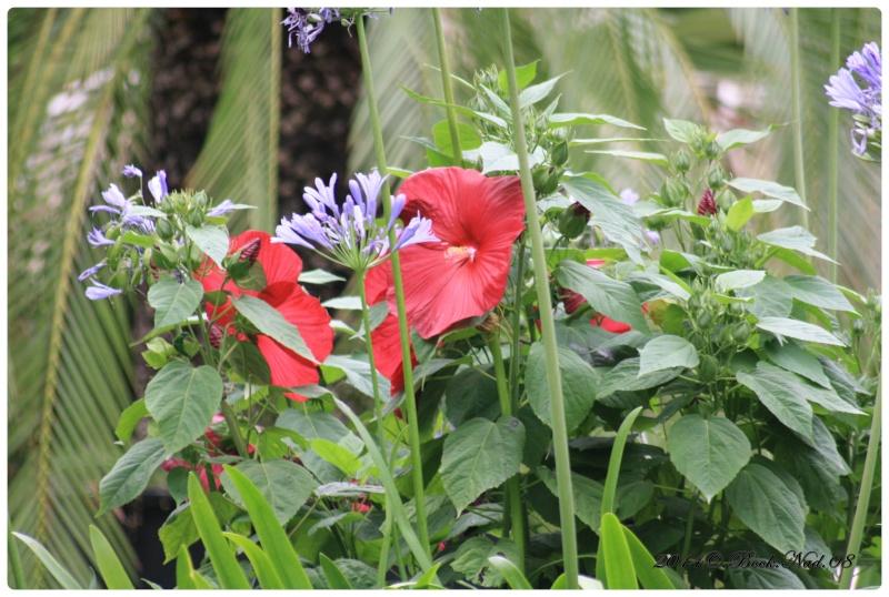 """Jardin des plantes, """"Les Capellans"""" St Cyprien - Page 5 Cadrer71"""