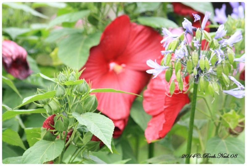 """Jardin des plantes, """"Les Capellans"""" St Cyprien - Page 5 Cadrer75"""
