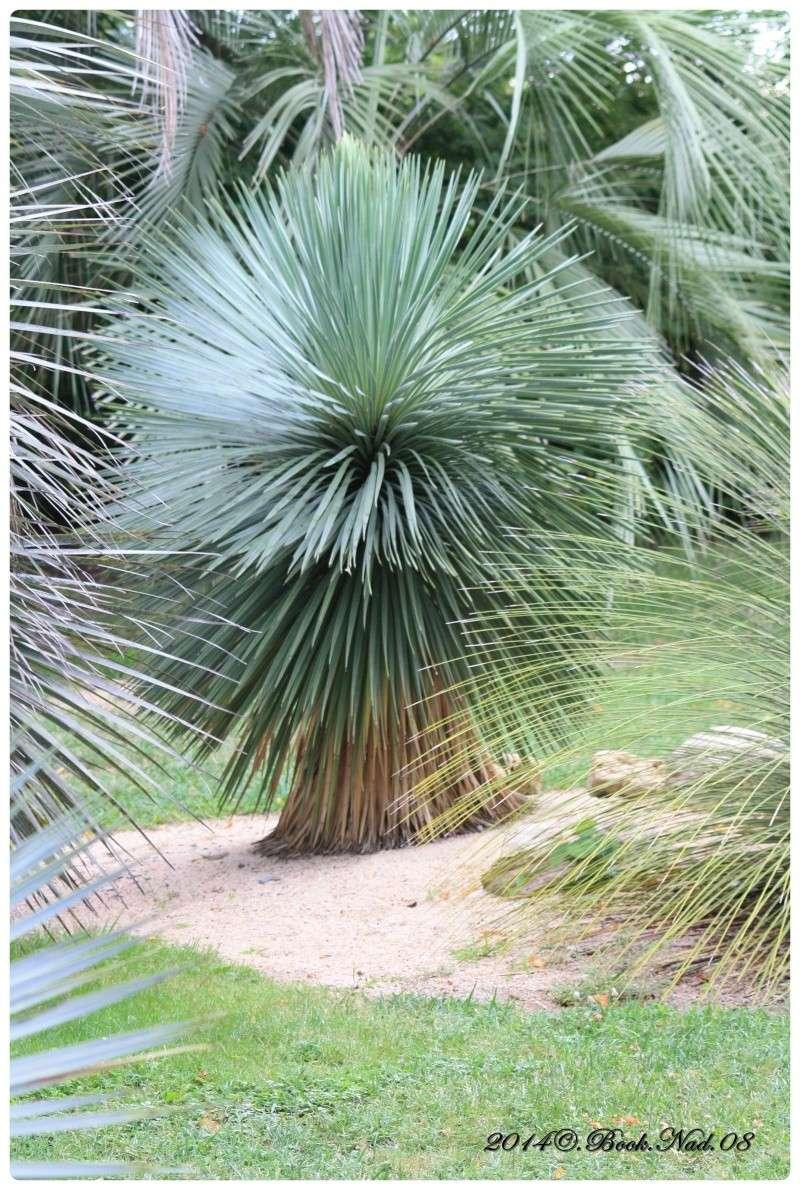 """Jardin des plantes, """"Les Capellans"""" St Cyprien - Page 4 Cadrer81"""