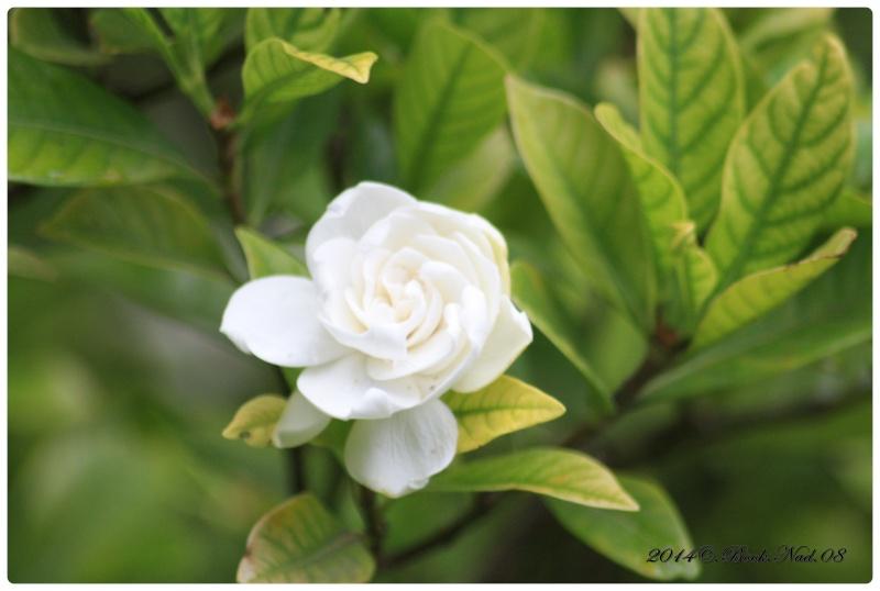 """Jardin des plantes, """"Les Capellans"""" St Cyprien - Page 4 Cadrer85"""