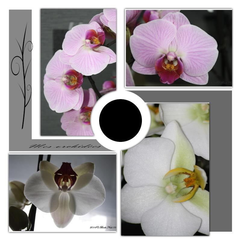 Les Orchidées Realis10