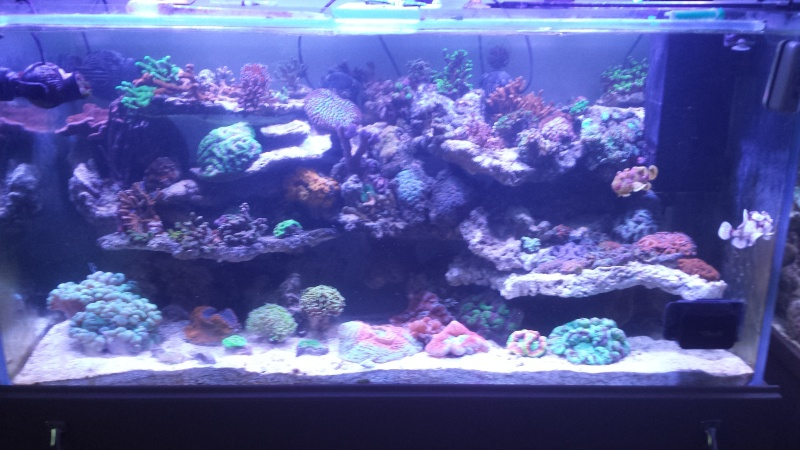 "Mon nouvel aquarium ""david59"" - Page 19 20140610"