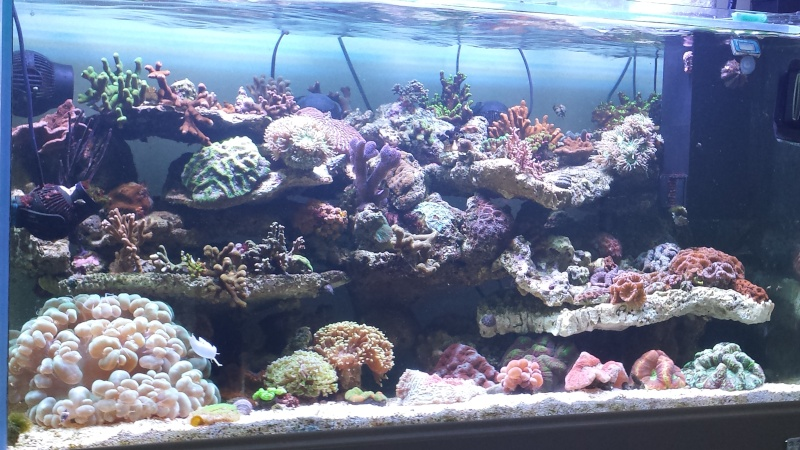 "Mon nouvel aquarium ""david59"" - Page 19 20140611"