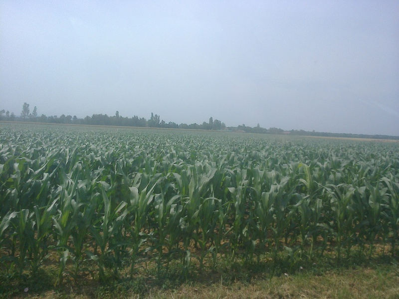 maïs 2014  - Page 9 Photo019