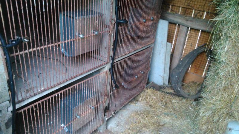 Présentation de l'élevage de Boris54  Installations fini  !  - Page 14 Dsc_0210