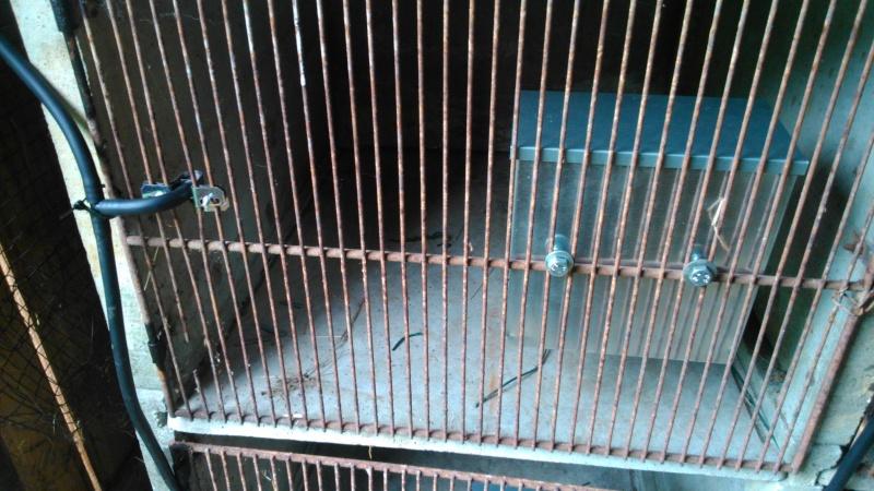Présentation de l'élevage de Boris54  Installations fini  !  - Page 14 Dsc_0213