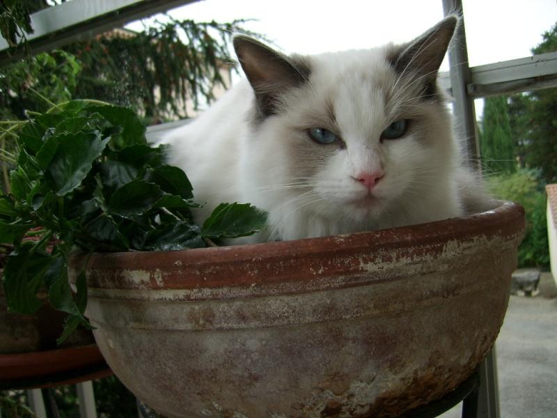 Je commence le répulsif pour chat ! Fanou_12