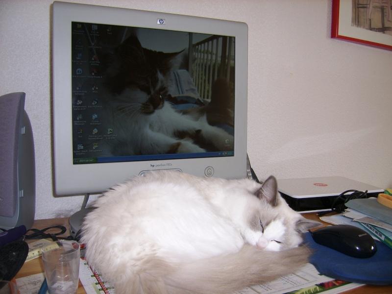 Spécial photos: Chat et ordinateur  Ssa51010